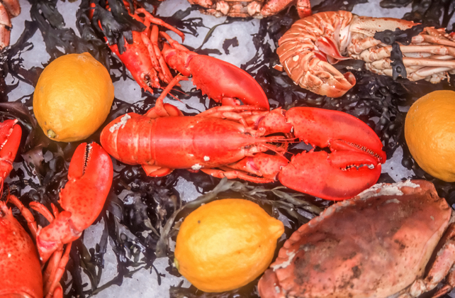 Benefits of Zinc - Lobster and Crab are great sources for dietary zinc